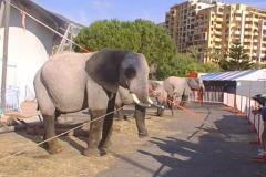 elefanti-casselly-25-montecarlo