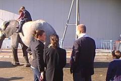 elefanti-casselly-25-montecarlo1
