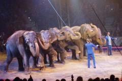 ElefantiK2