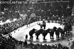 American Circus st