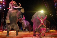 015-Elefanti