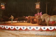 circo-medrano-005