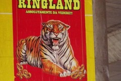 ringland3