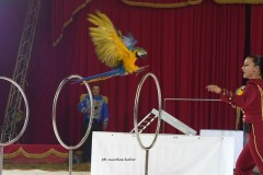circo-romina-orfei-2021-castello-cisterna-dellacalce-circusfans-042