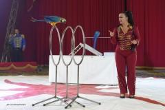 circo-romina-orfei-2021-castello-cisterna-dellacalce-circusfans-045