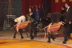 sezar-sirki-ankara-gennaio-2007-coda-prin-turchia-11-jenny-bizzarro