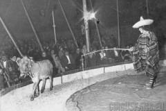 10-circo-marino-alaska-texas-archivio-cantoro-021