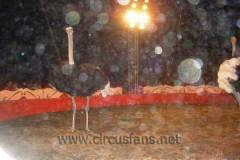 Wanet Togni soc. E. Miletti Togni + Mavilla 30-03-09 sp