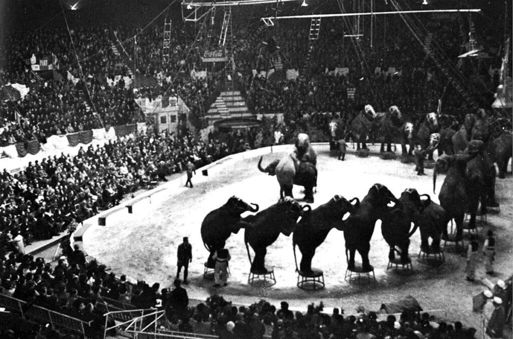 1963-2013: 50 ANNI DI CIRCO AMERICANO TOGNI