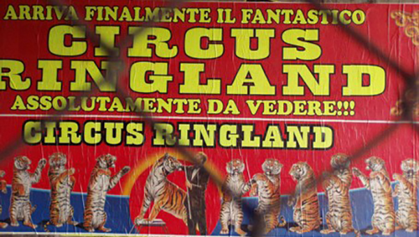 Circo Ringland