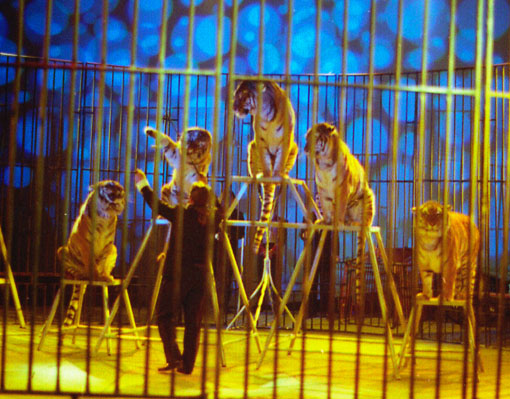 08/04/2002: LA FAMIGLIA NICOLAY FERRANDINO CAMBIA CIRCO