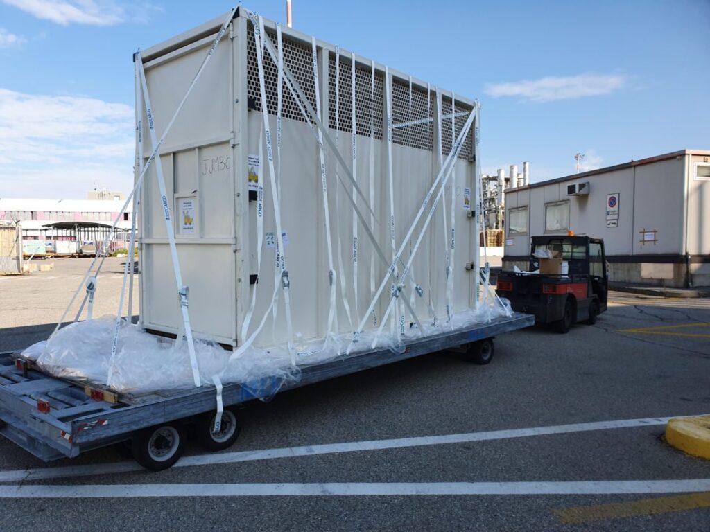 Stampa: 3 elefanti in volo con Saudia Cargo. Trasporto eccezionale a Malpensa