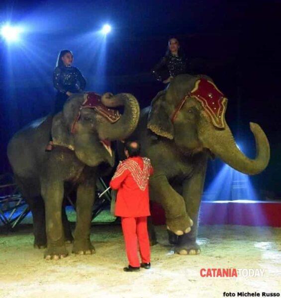 robert gartner elefanti circo greca orfei
