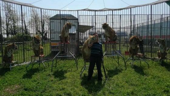 Il coronavirus ferma anche il circo, a Milano bloccati artisti e animali