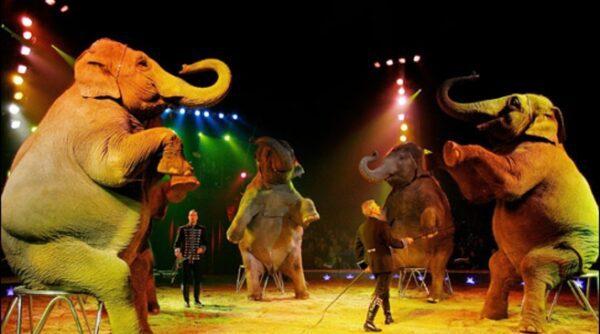 Millenium Circus