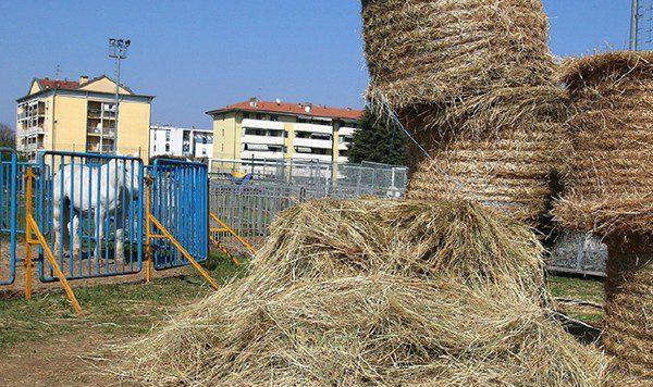 Circo Città di Roma bloccato a Saronno