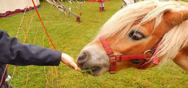 Coronavirus: agricoltori mobilitati per i pasti a animali da circo