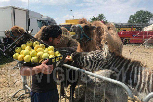 Circo Busnelli Niuman bloccato a Rovigo