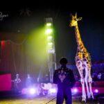 Emergenza sanitaria: Circo Madagascar bloccato ad Ancona, artisti e animali in difficoltà. Arriva la Protezione civile