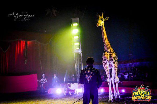 Maya Orfei Circo Madagascar