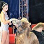Rovigo, il circo viene sfrattato. I clochard aprono le porte agli animali