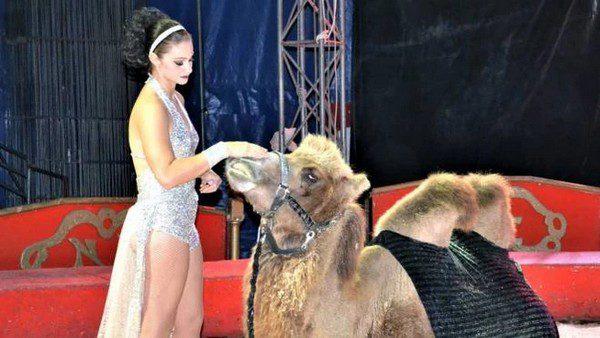 Circo Busnelli Niuman
