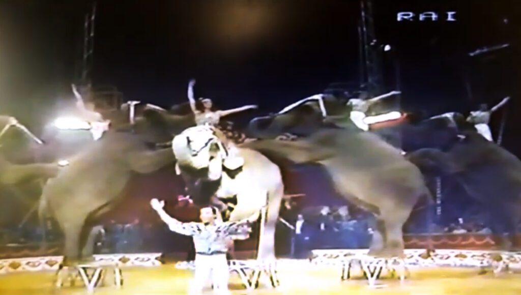 Elefanti del circo Medrano