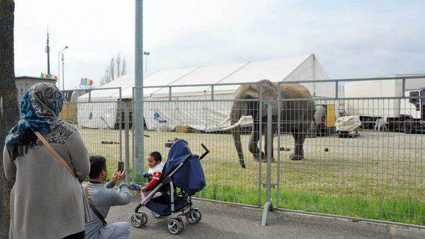 Elefante in una immagine di repertorio