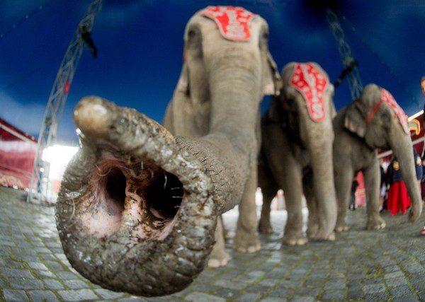 elefanti di Elvis Errani