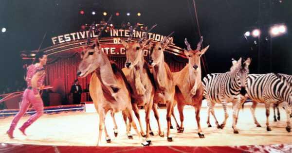 ALMANACCO DEL FESTIVAL DI MONTECARLO – 14° EDIZIONE 1989 - Circusfans Italia