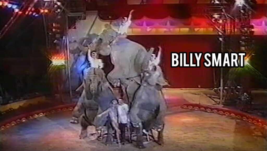 GLI ELEFANTI DI BILLY SMART AL CIRCO CITTA' DI ROMA (1991/1992): Il Video