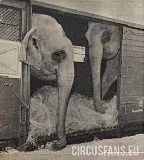 IL CIRCO DARIX TOGNI (1964) SI IMBARCA PER LA SARDEGNA: Video e foto