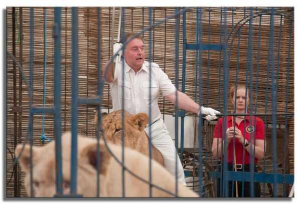 La lunga saga dei leoni di Jim Clubb - WORLD CIRCUS ARTIST