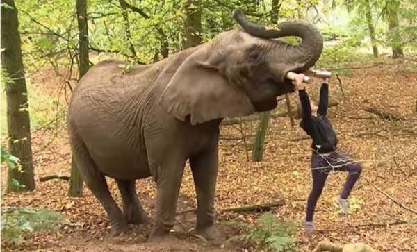 Parlamento al voto sull'ultimo elefante da circo rimasto in Olanda