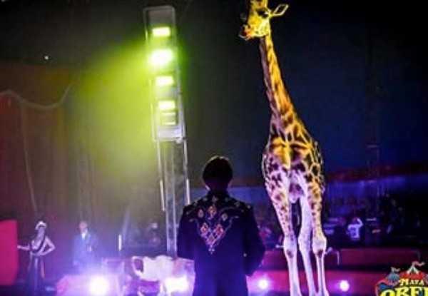 Coldiretti dona cibo per gli animali del circo Madagascar rimasto bloccato ad Ascoli