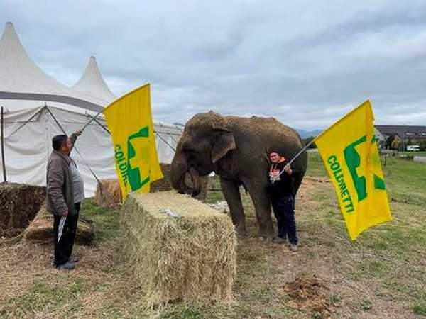 Coldiretti dona fieno al circo bloccato a Fabriano
