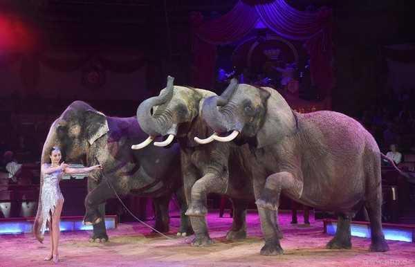 Il Circus Krone è preoccupato per Mala