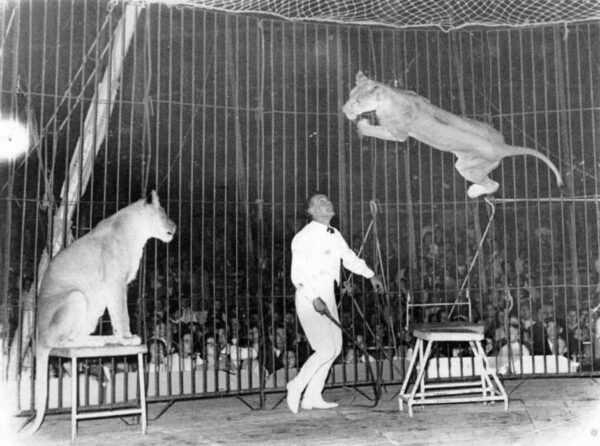 ORLANDO ORFEI tra le sue leonesse