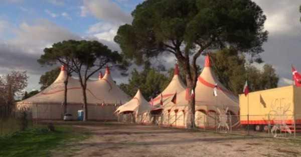 appello in video del Circo Lidia Togni