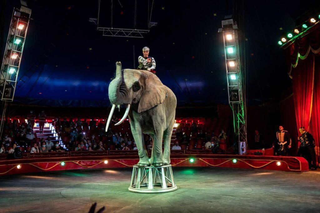 Coronavirus: circo bloccato a Messina, garante diritti animali 'stop a critiche miopi'