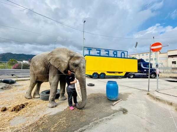 Circo bloccato dalla pandemia a Messina