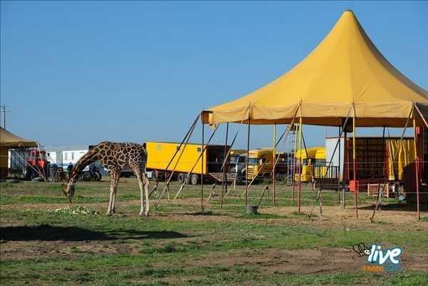 Circo di Trani concessi altri giorni alla carovana.