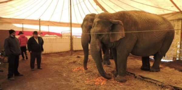 Jones ed Elvio Togni con gli elefanti del circo Lidia Togni