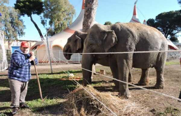 Jones Togni ed i suoi elefanti