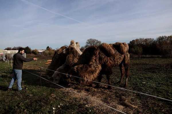 circo itinerante bloccato in Belgio dalla pandemia