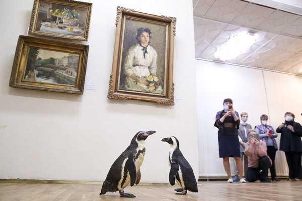 I pinguini del circo russo... vanno al museo