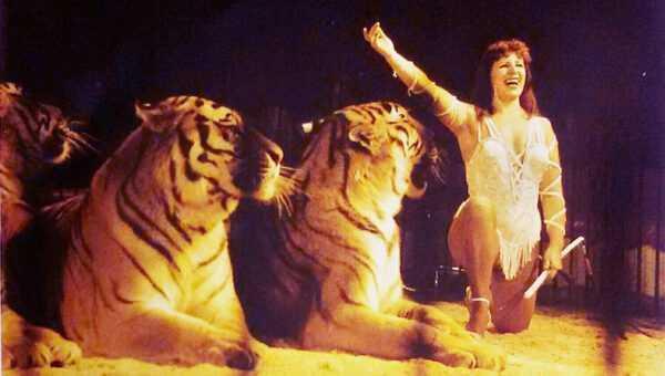 LE TIGRI DI MISS BETTY GEIER BUSCH AL CIRCO AMERICANO (1988/89): Il Video