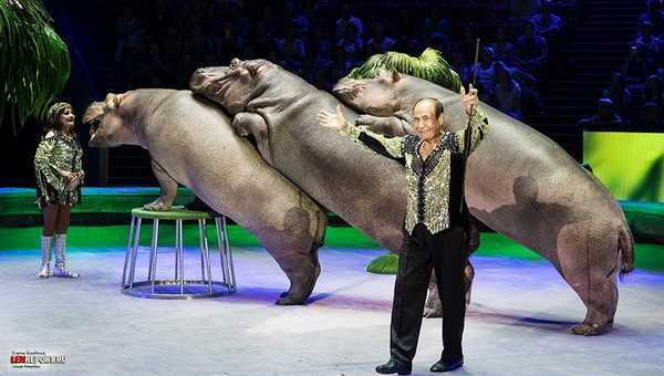 50 sfumature di esotico circo ippopotami