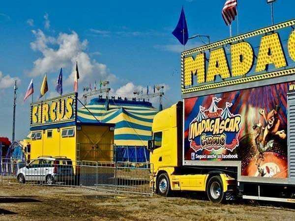 La disperazione del Circo Madagascar
