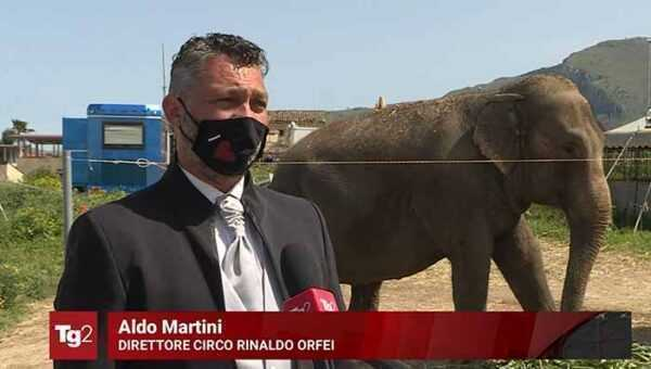 Il Circo Rinaldo Orfei fermo a Palermo al tg2